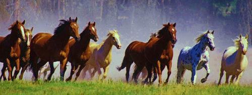 sciogli le briglie ai cavalli